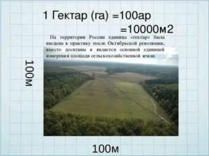 1 га земли это сколько соток